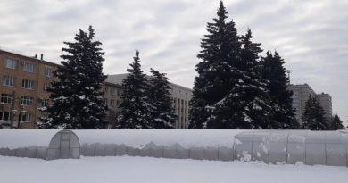 В центре Челябинска установили теплицы